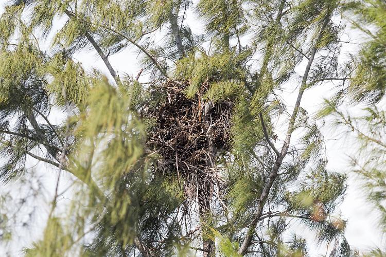 Nest view from the south