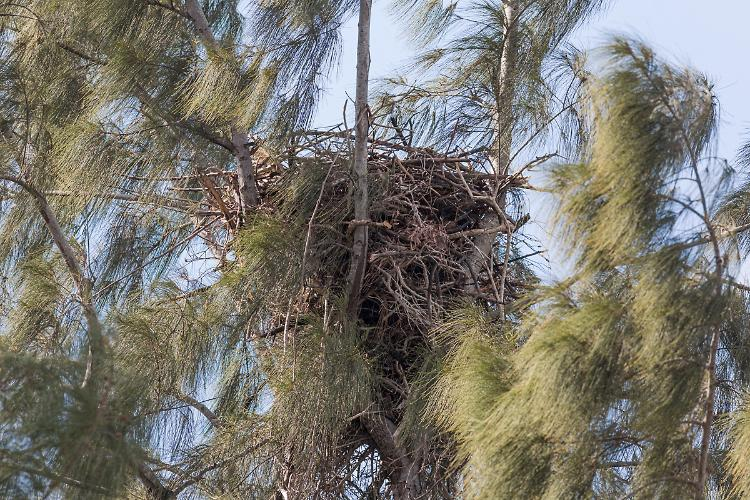 Nest view from the east
