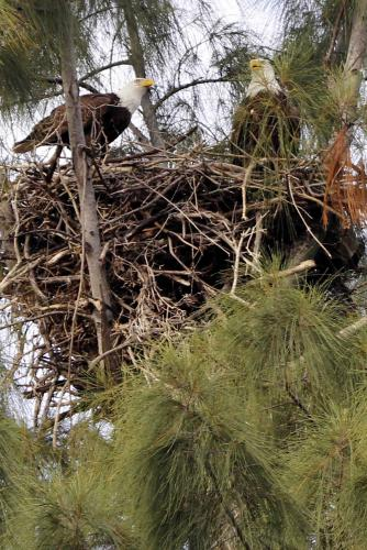 This is the nest from across the street