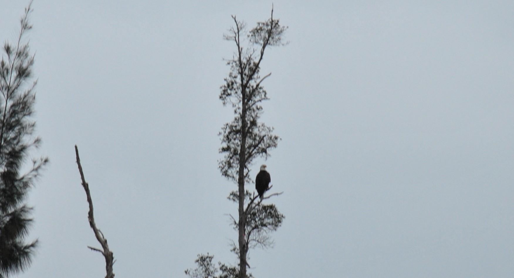 Eagle nearby DA005 mark