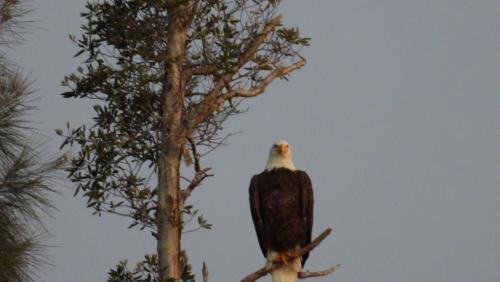 Eagle nearby DA005 mark actual sight Dec 14th