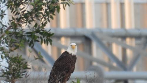 Eagle nearby DA005 mark actual sight Jan 3 2021